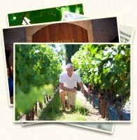 Moran Custom Wine Tour by Sharon Burns of Napa Valley Custom Events